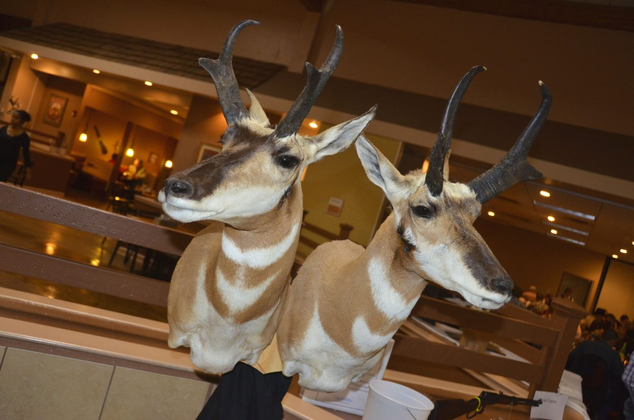 A pair of pronghorn mounts greet entrants at the Clarion Inn & Suites Saturday night at the Safari Club International Yampa Valley Chapter fundrasier banquet.