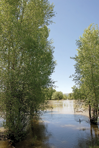 The Yampa River overflows its banks east of town.