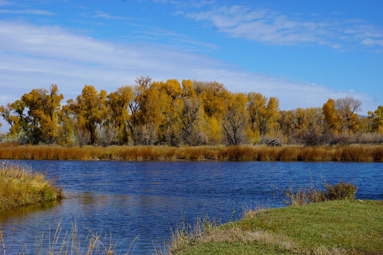 Leaves on the cottonwood trees at Loudy Simpson Park have turned bright orange.