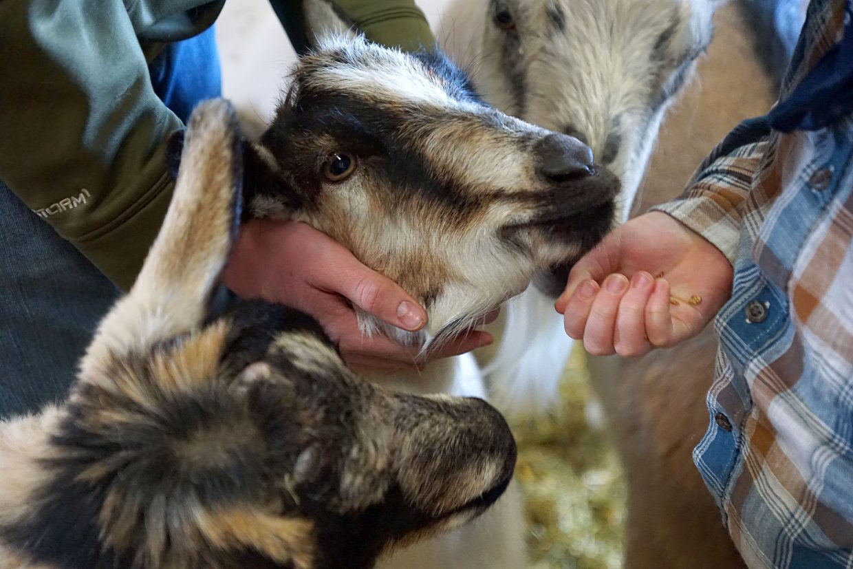 Creating goat's milk soap a family affair at Winters