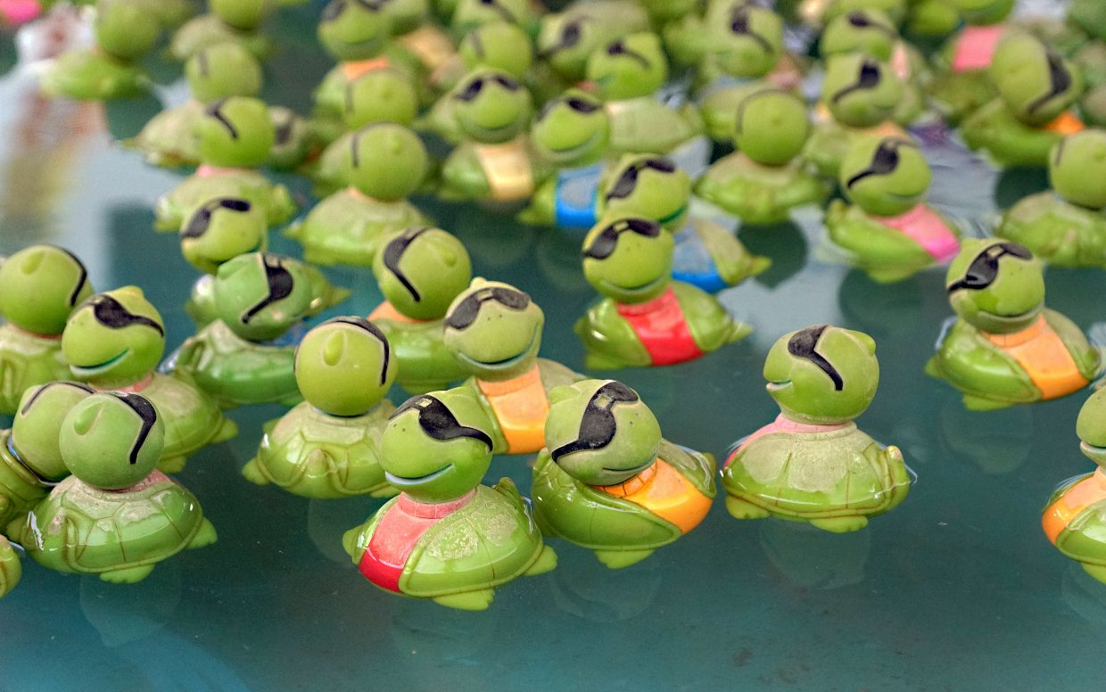 Turtles float in a pool at one of the midway games.