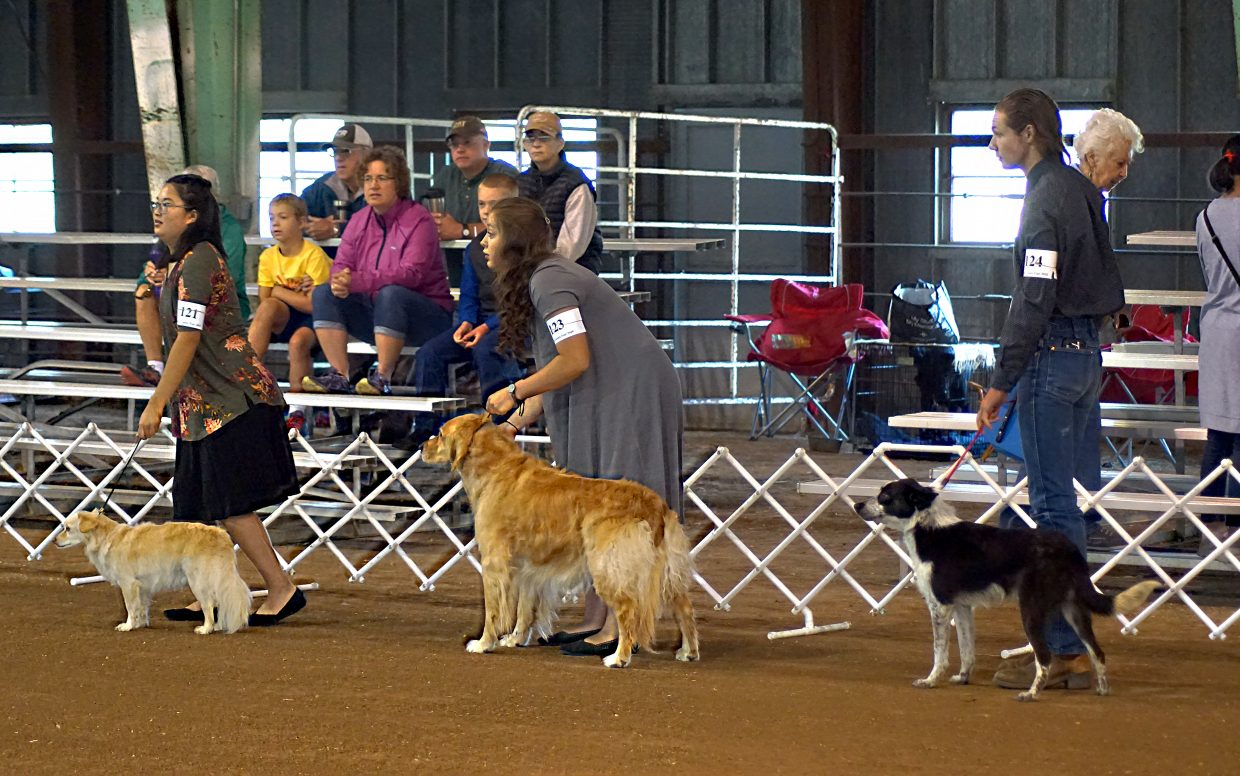 Handlers line their dogs up for the start of the 4H/FFA Senior Showmanship competition.