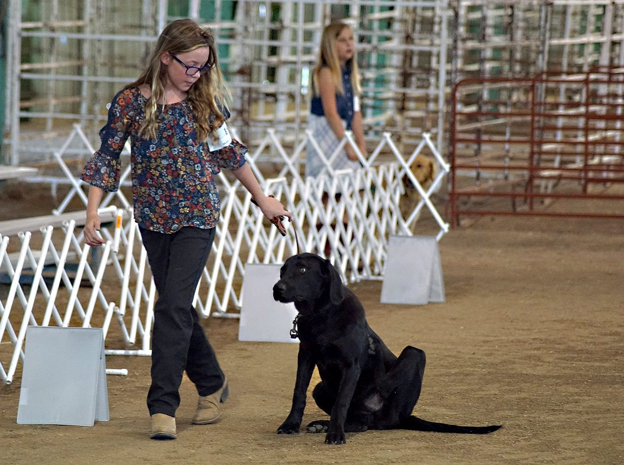 A young dog named Cooper takes a moment to scratch an itchy spot during the rally event at the 4H and FFA dog show Tuesday morning, as his handler, Kaden Grinolds, urges him to move.