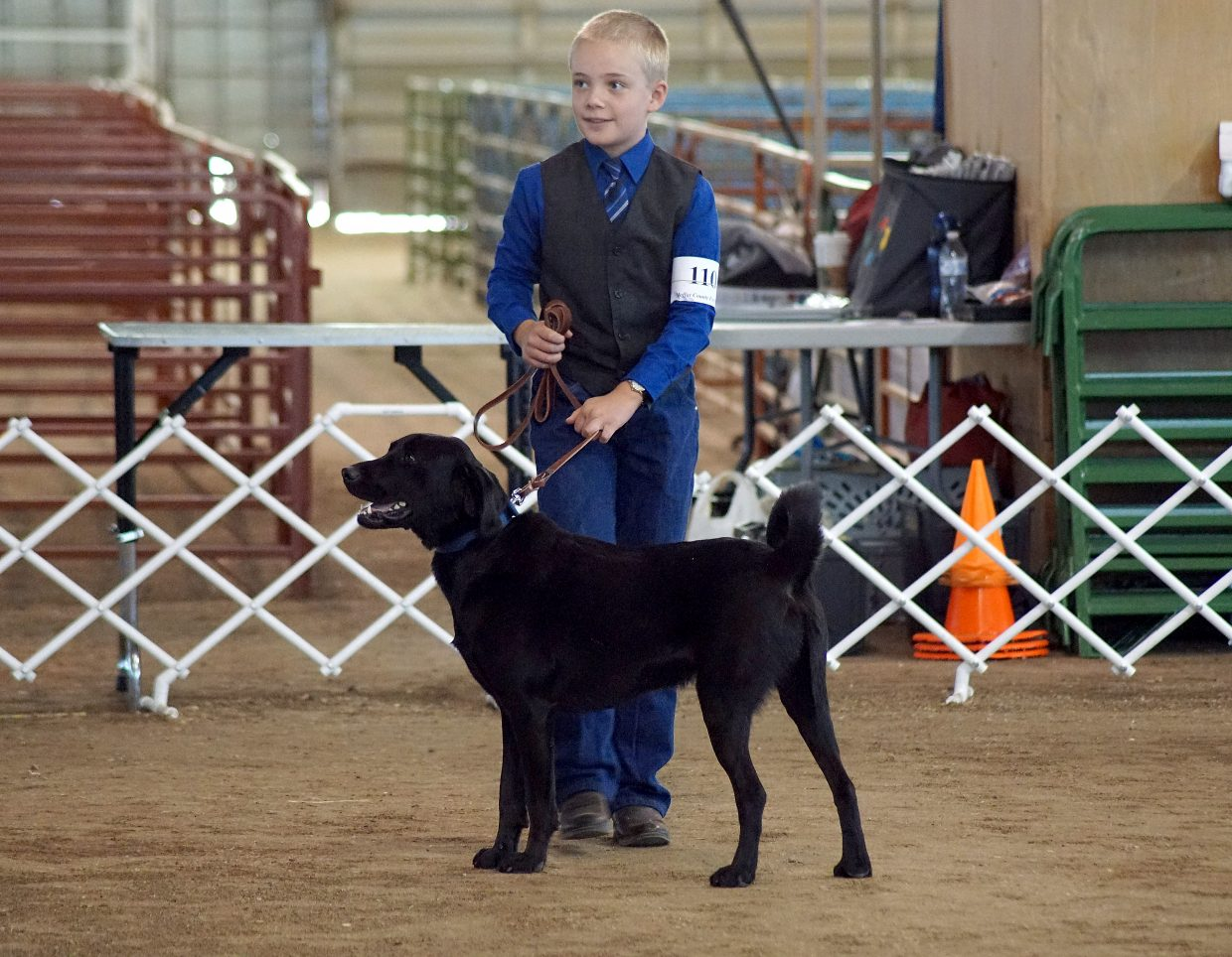 Travis LeFevre and his family adopted their dog, Sam, from the animal shelter, and after working on obedience training for the fair, Sam has become such a good dog, their dad says he can stay.