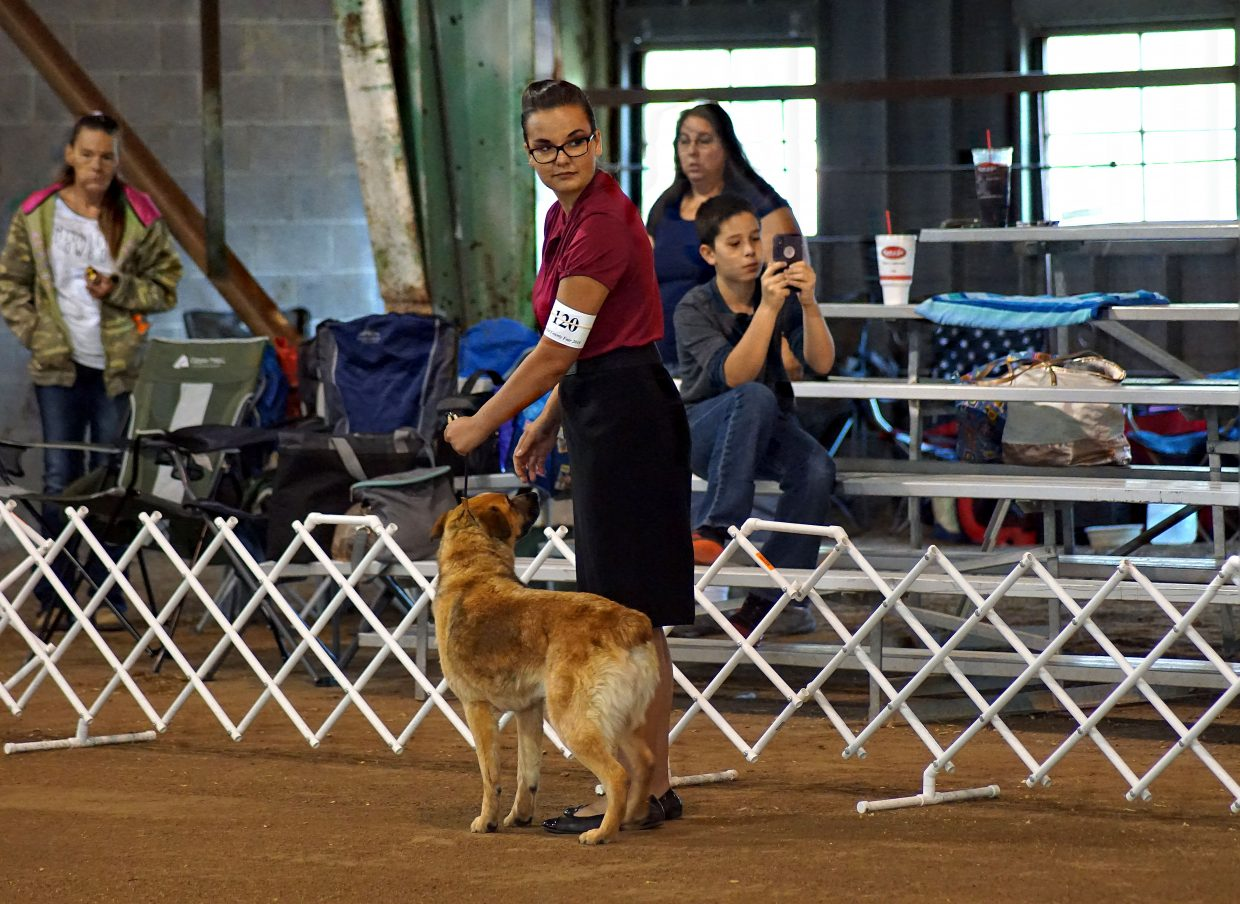 Kristi Barnes  unexpectedly lost her dog, Roo, a couple of months before the fair. She turned ranch dog Bandit into a show dog in time to compete.