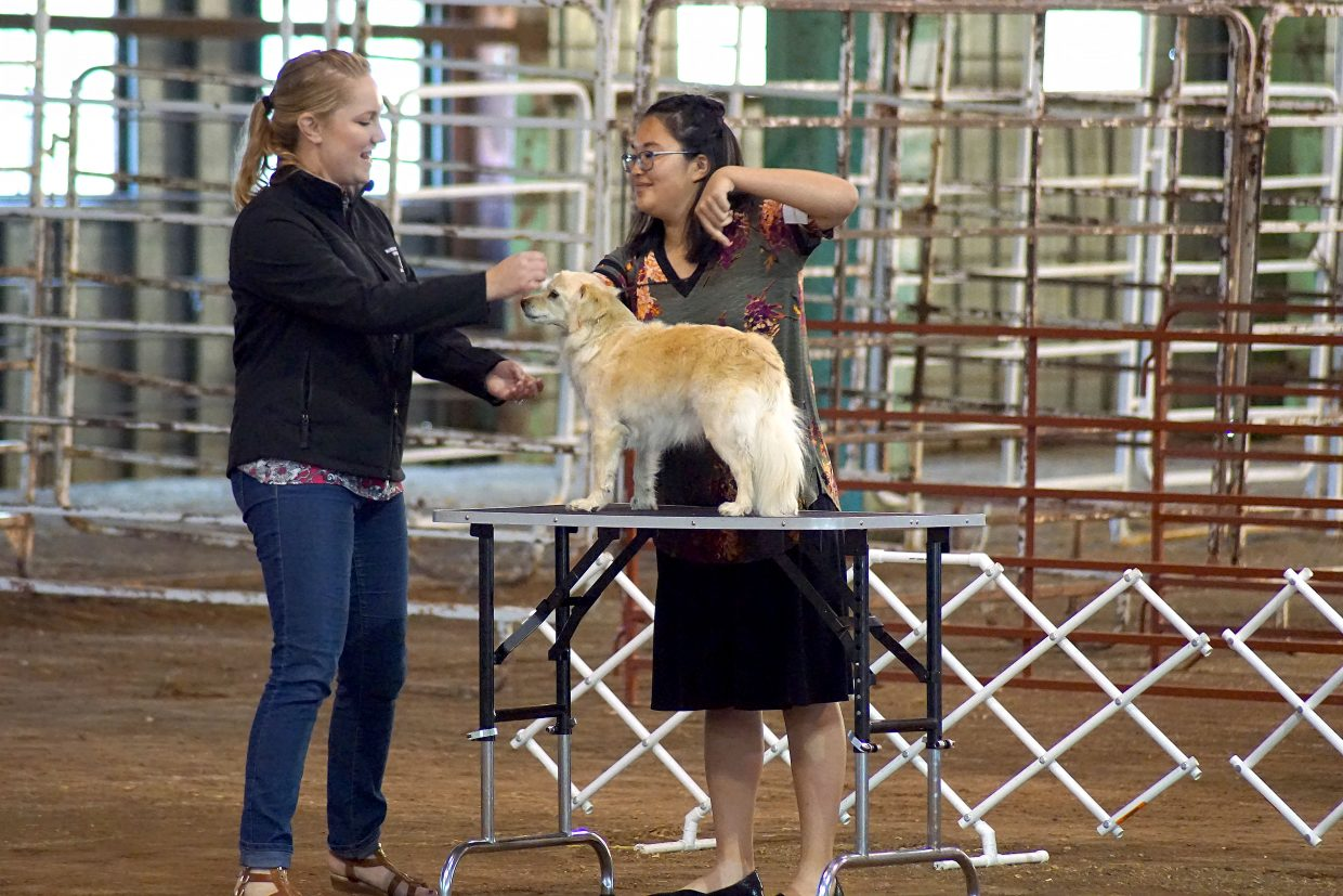 Lauren Hilley and her dog, Madison, impressed the judge, winning first place in Senior Showmanship at the 2018 Moffat County Fair.