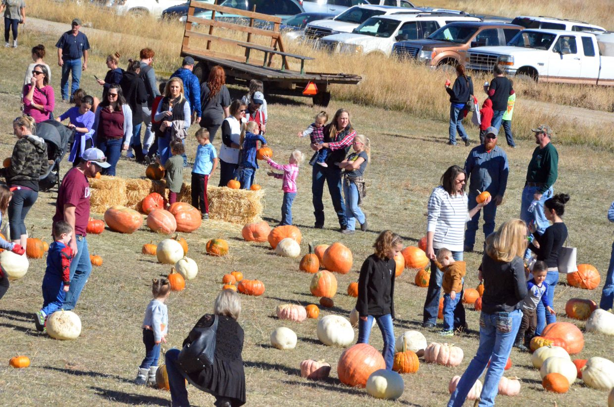Families look through their choices at Saturday's pumpkin patch at Wyman Living History Museum.
