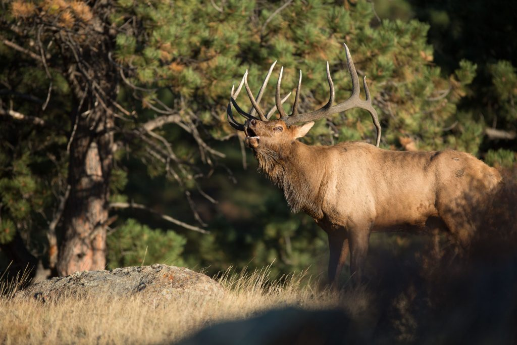 Colorado Hunter: Trophy tips — Three hints for hunting the